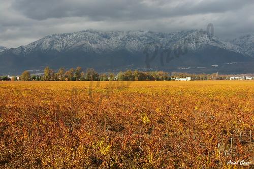 chile santiago winter rain vineyard lluvia invierno uva turismo grape viñedo viñacousiñomacul