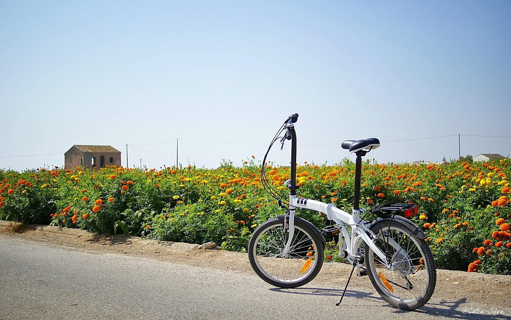 Valencia en bici_ Huerta Valenciana (10)