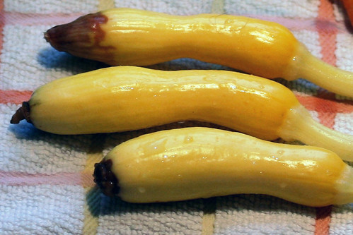 summer squash with rot at blossom end