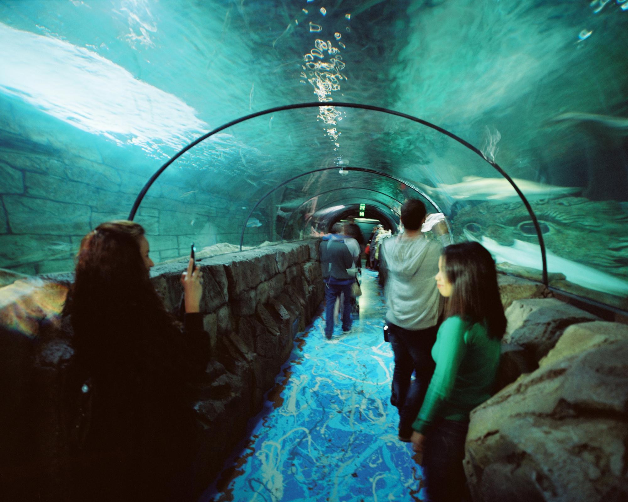 Sydney Aquarium i