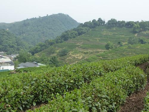 Zhejiang-Hangzhou-Longjing-The (49)