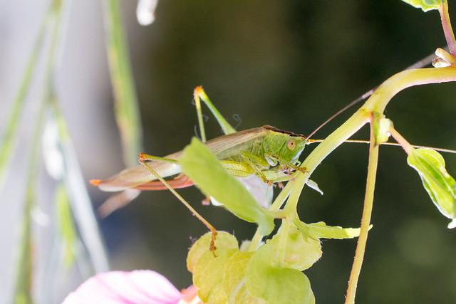 19.07.2014 Grasshopper