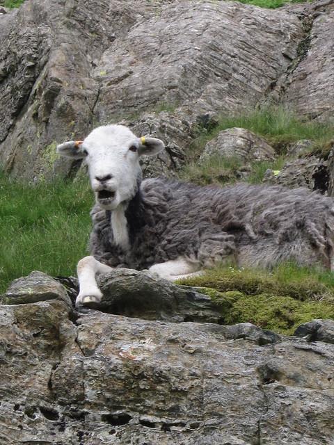 Lake District June 2014 009