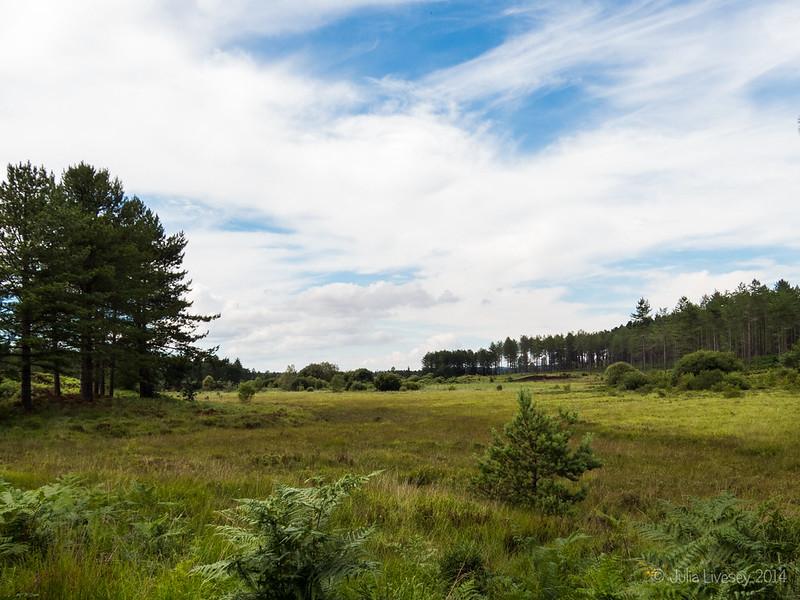 View over Decoy Heath
