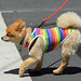 2014 SF LGBT Pride Parade by AnotherSaru - Limited mode