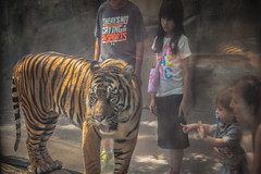 Daniel pointing at the Tiger
