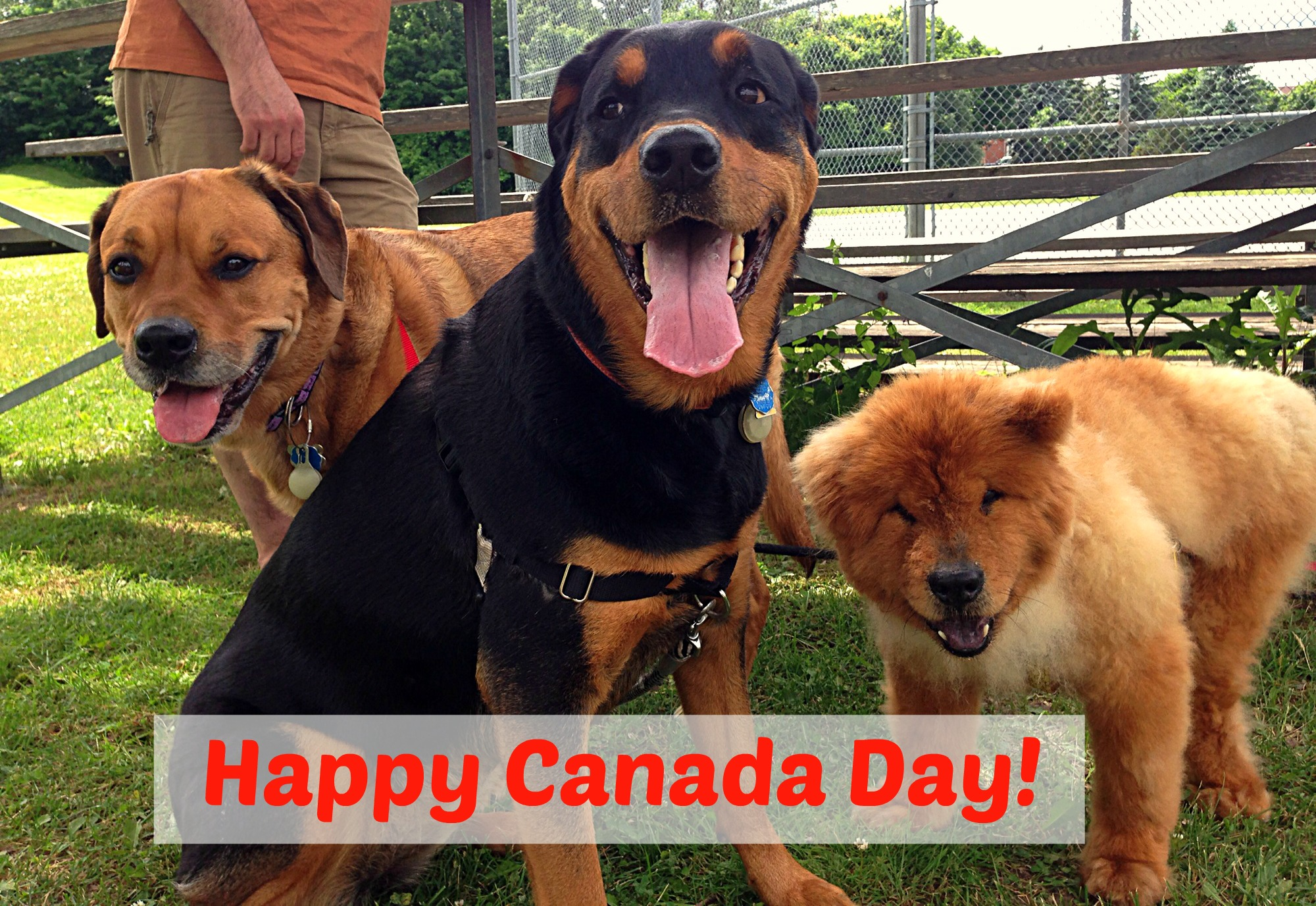 Canada Day dogs