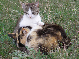 Kitten and Slepping Cat