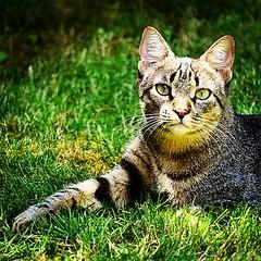 De posados en el jardín! #igersitzi #igerscats #igersanimals #alpha6000 #igerstobago #comoposa