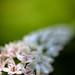 Flower laden by amazon2008