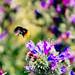 Bee takeoff
