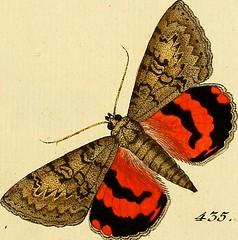 """Image from page 186 of """"Sammlung europscher Schmetterlinge, errichtet von Jacob Hner in Augsburg"""" (1793)"""