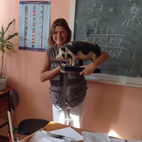 Перерыв в лекции))) лекция про черепаховый окрас, а свинья мне просто понравилась))) #фелинологическиекурсы #калуга