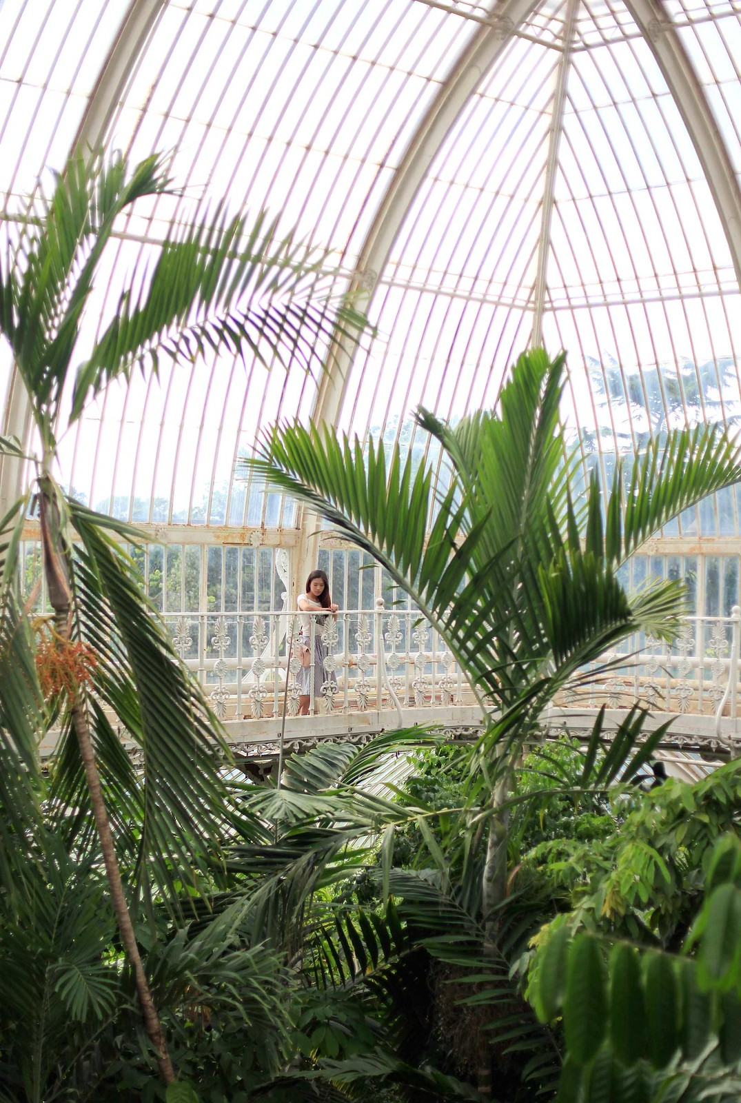 kew-gardens-greenhouse-from-above