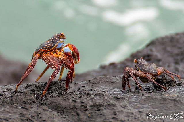 Ecuador Galapagos DSC_1111