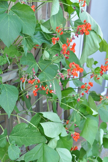garden september 4