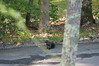 blacksquirrel058