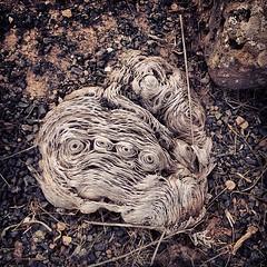 Arte natural sin conservantes. La naturaleza está llena de piezas únicas, una de ellas es este seco tejido vegetal, la otra pieza única en la naturaleza eres tú, ¡Gracias por estar ahí!  #art #tunera #esqueleto #vegetal #tunera #you #Lanzarote #Canarias #