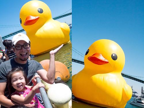 duck28