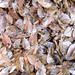 5618 Dried fish at a market - Labuan Bajo Flores Indonesia - 08-11-2014