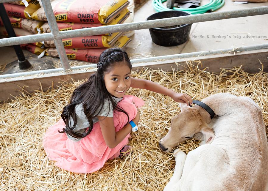 state fair 2 blog