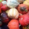 Why hello, decorative gourd season.