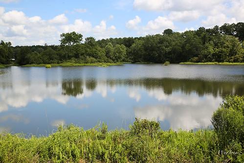 trees reflection mill water clouds creek pond alabama reservoir andrewjackson np cloudscape lockhart millpond highway55 florala pondcreek loggingpond wyojones jacksonlumbercompany jacksonloggingpond