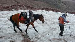 Konie transportuja plecaki na lodowcu Gergeti.