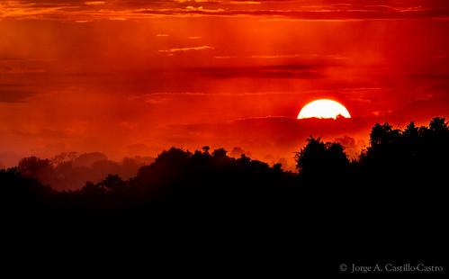 sunset sun ecuador biodiversity 2014 biodiversidad yasuní