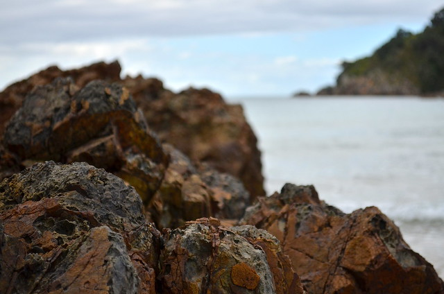 Volcanic rock | Waiheke Island