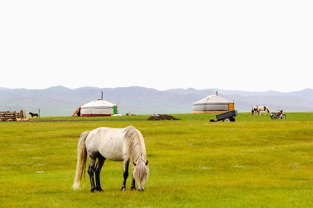 Jewels of Mongolia