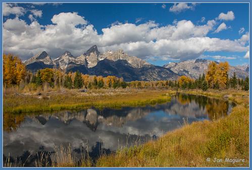 fall fallcolor unitedstates moose wyoming aspen grandtetonnationalpark