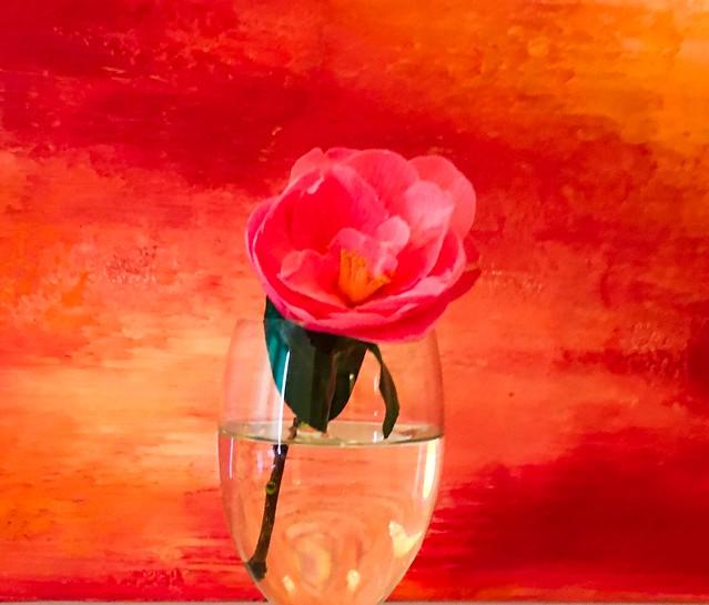 Camellia on a Dutch abstract!