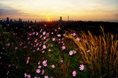 Cosmos and Johannesburg skyline at dusk
