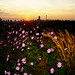 Cosmos and Johannesburg skyline at dusk by Finepixtrix
