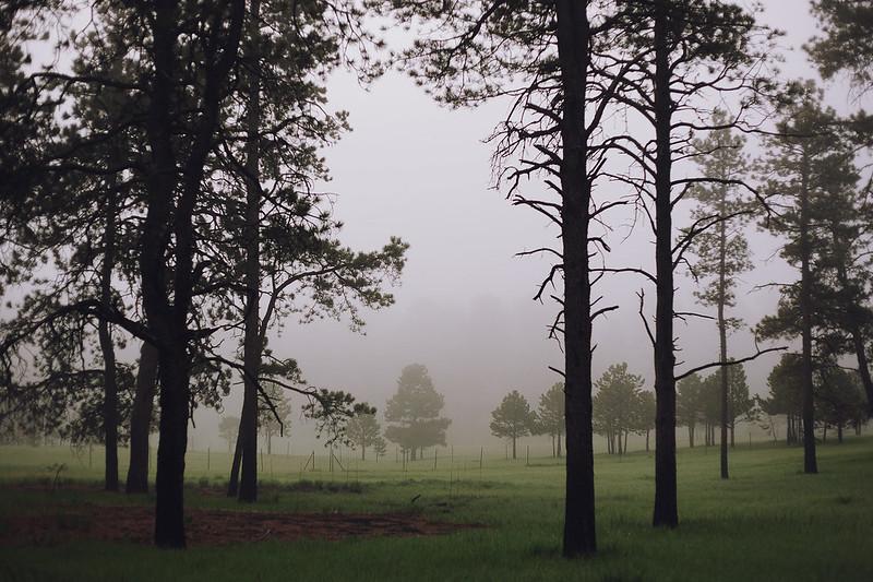 Kisiel-2014-05-22-0054