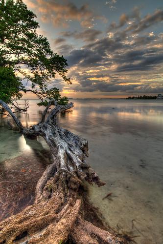 sunset sky tree clouds dead unitedstates florida hdr 3xp sunsetandsunrises