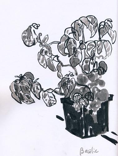 May 2014: Basil Plant