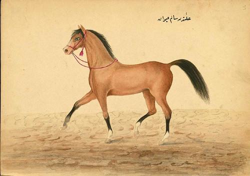 009- Un caballo en perfecto estado- Walters manuscrito W.661- fol 77 a.