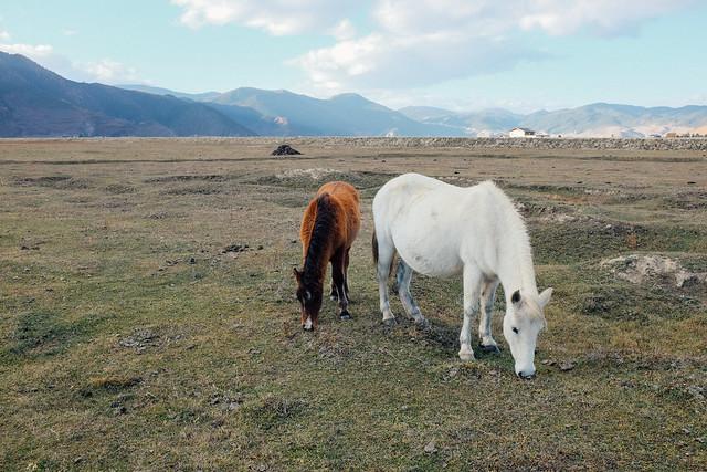 Shangri-La Horses