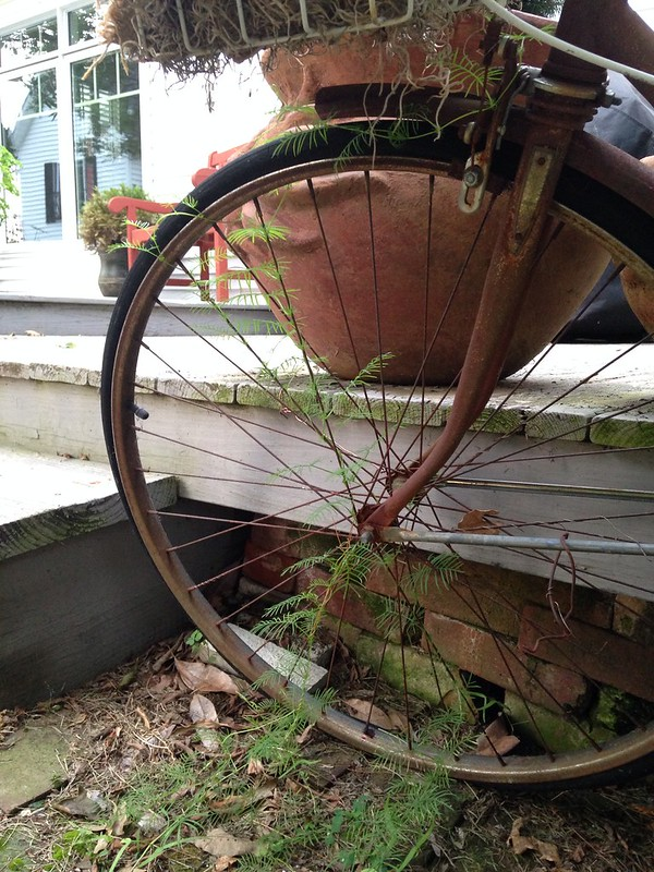 bicycle tire vines