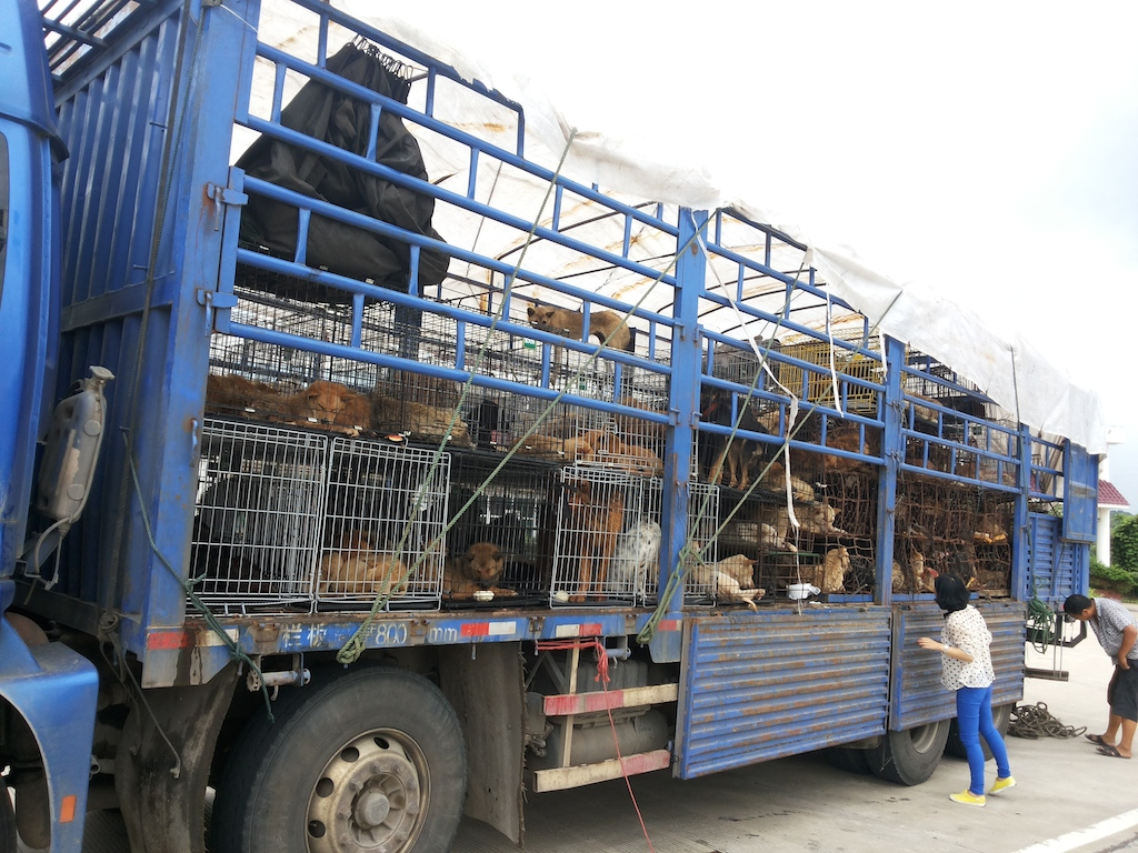 Dogs on the truck, photo by Guangyuan Bo'ai Animal Protection Center, June 2013