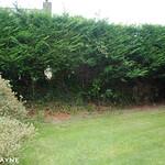 Side garden - before