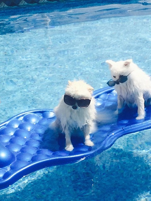 pups sunbathing