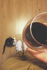 Me, wine and one Cat.-