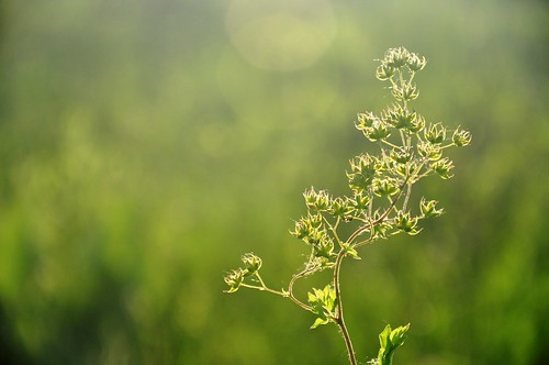 life flowers summer sunlight plant green nature field sunshine stem glow meadow flare prairie wildflower crooked
