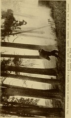 """Image from page 80 of """"Through our unknown Southwest, the wonderland of the United States-- little known and unappreciated-- the home of the cliff dweller and the Hopi, the forest ranger and the Navajo.-- the lure of the painted desert"""" (1913)"""