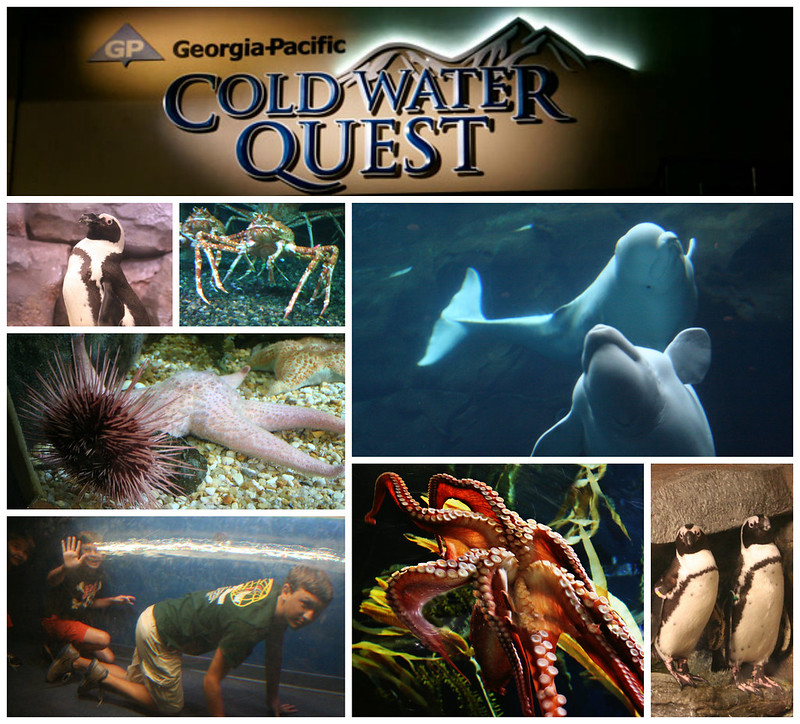 Cold Water Quest