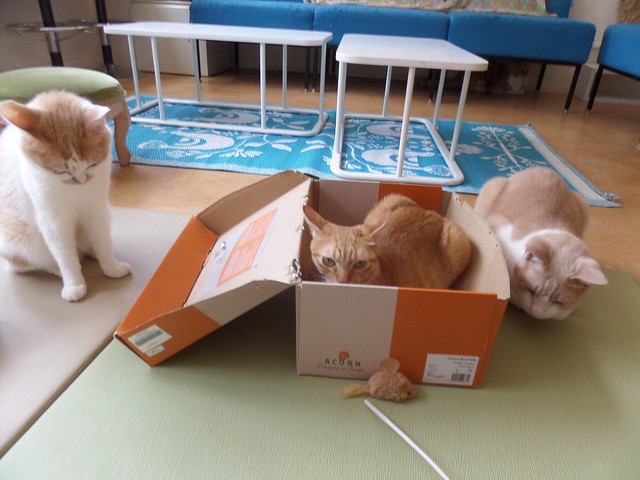 Defending the box