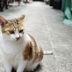0481-handsome cat